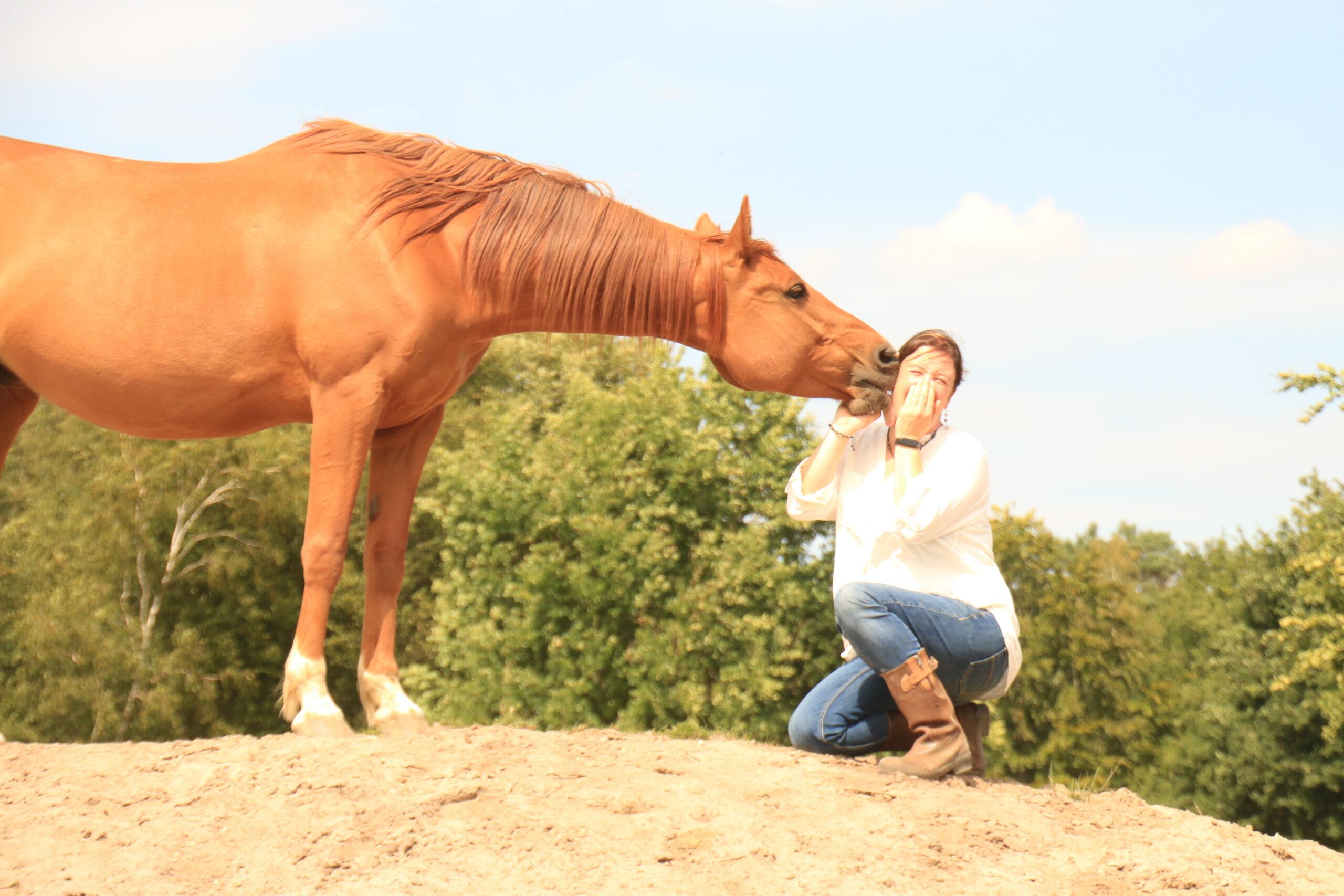 teksten paarden