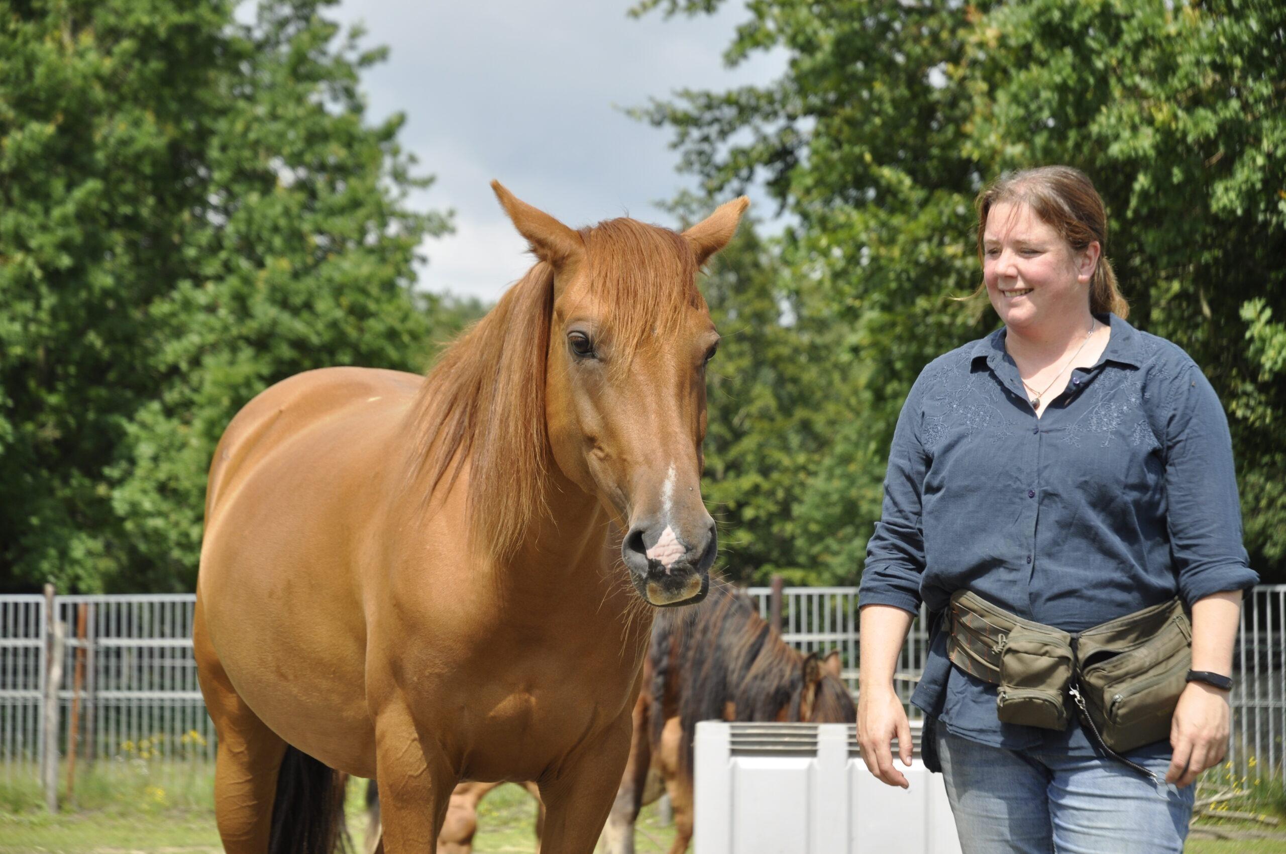 clickertraining paard
